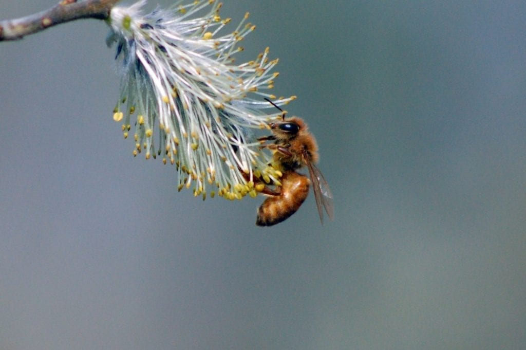 Tips to Keep Bees and Wasps Away