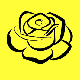 Yellow Rose Package