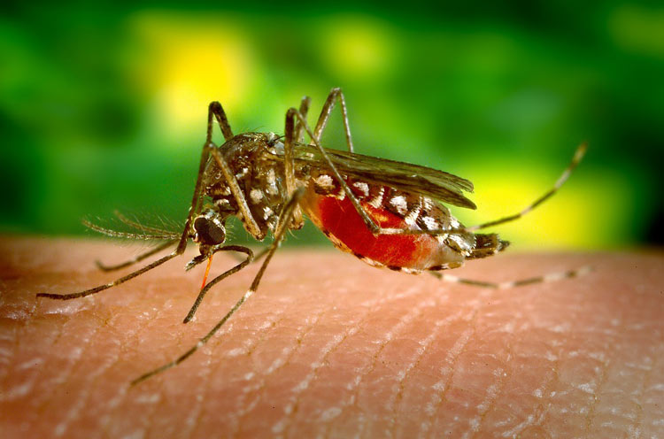 natural bug spray for mosquitoes