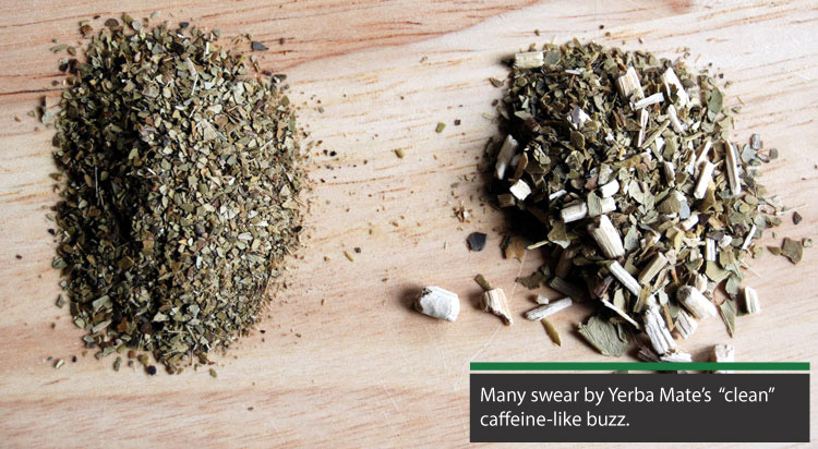 yerba mate provides a clean caffeine buzz without jitters