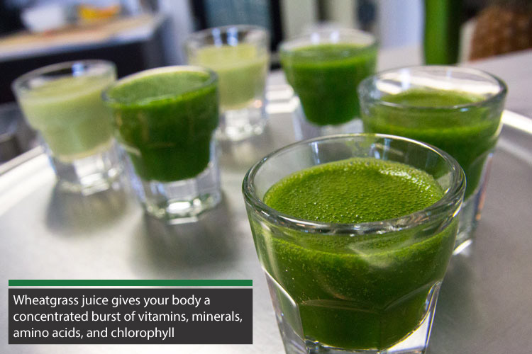 wheatgrass juice gives your body a concentrated burst of vitamins, minerals, amino acids, and chlorophyll