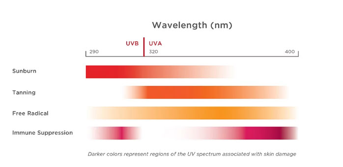 Chart of UVA vs UVB radiation for skin burns, tanning, free radical damage, and immune supression