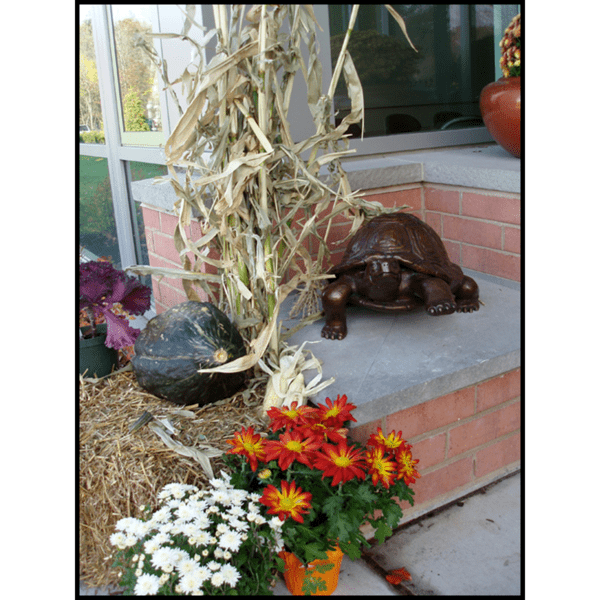 photo of bronze turtle sculpture on stone and brick bench next to glass wall with fall decorations around it