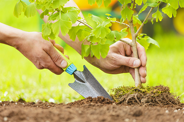Dynamic Moving to plant a tree for each client they move in 2015
