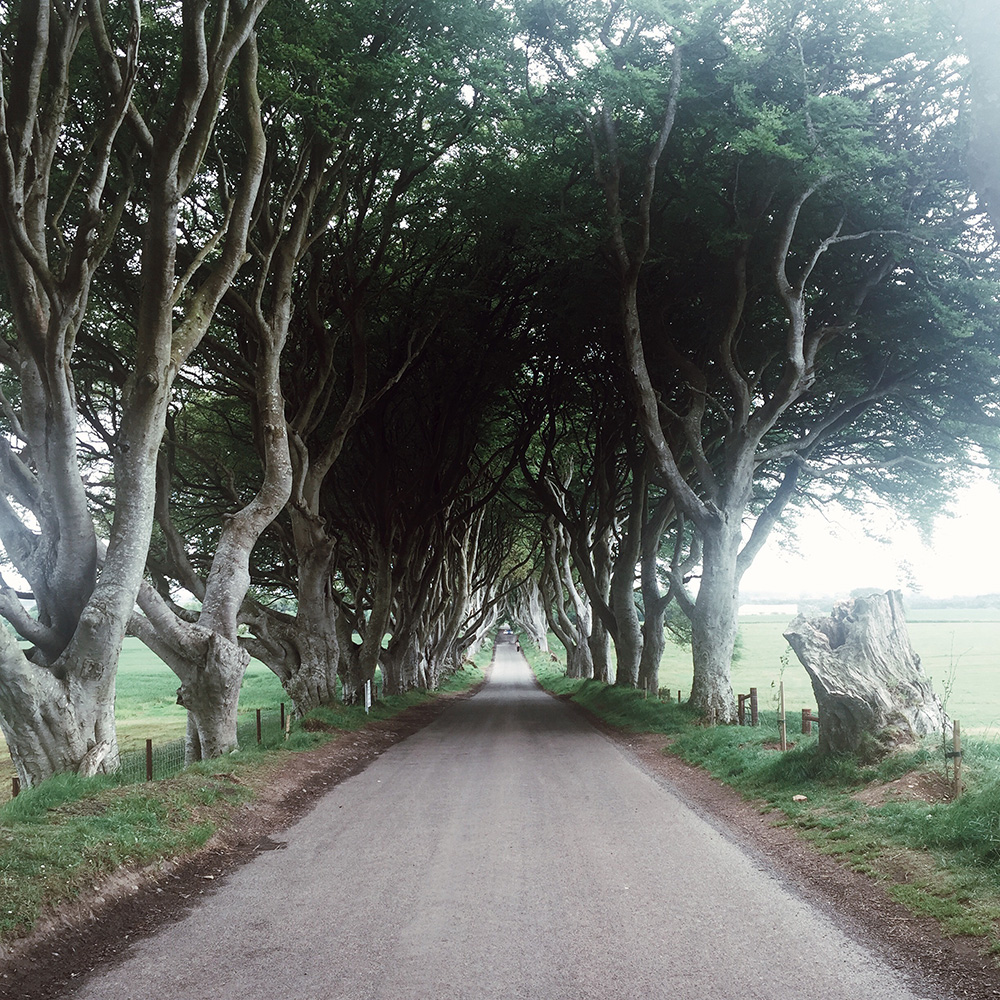 The Dark Hedges Game of Thrones Belfast Sarenabee