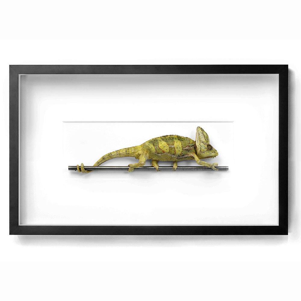 Wiener Museum Christopher Marley Chameleon
