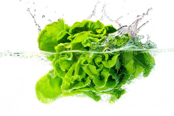 What's so Special about Lettuce?