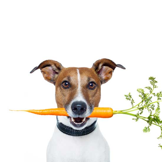 How You Can Grow Your Own Pet Food