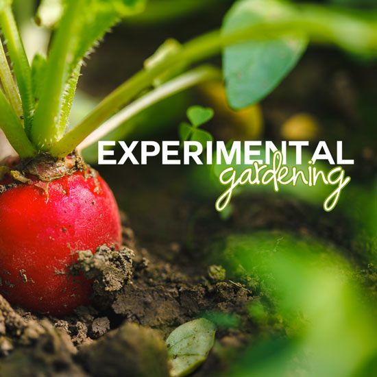 """Our 2015 """"Experiments"""""""