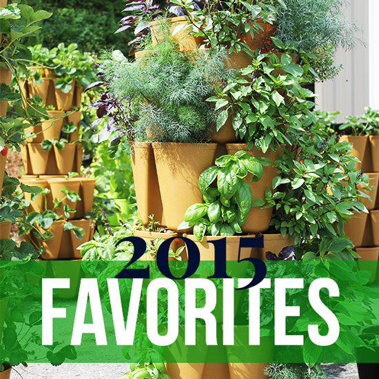 Our Favorite Plants from Summer 2015