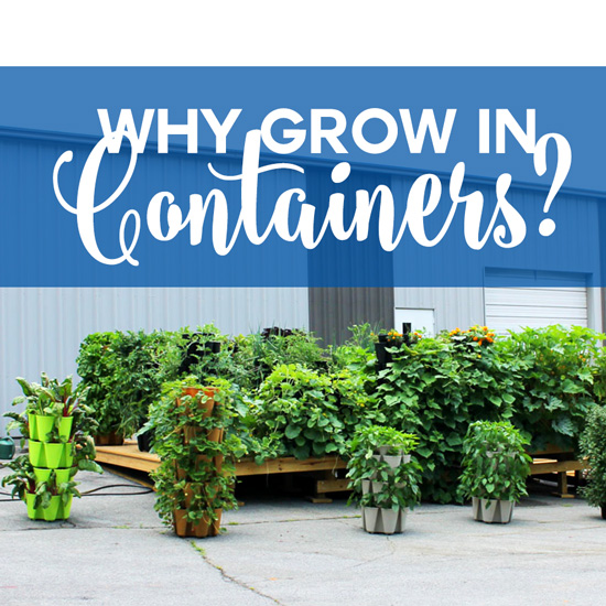 The Benefits of Container Gardening