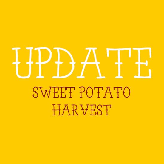 A Sweet Potato Update