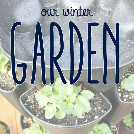 What we are Growing this Winter