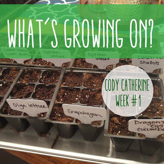 What's Growing On? Cody Catherine Week #1
