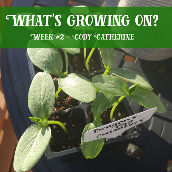 What's Growing On? Cody Catherine Week #2