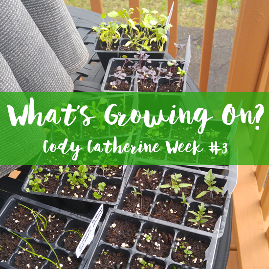 What's Growing On? Week #3 Cody Catherine