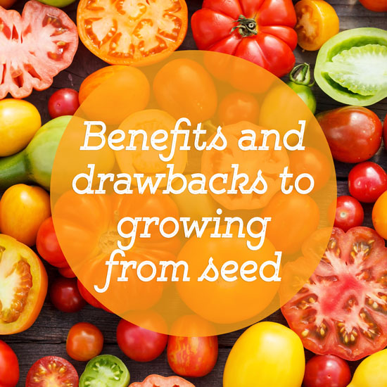Why You Should Grow From Seed (And Why You Shouldn't!)