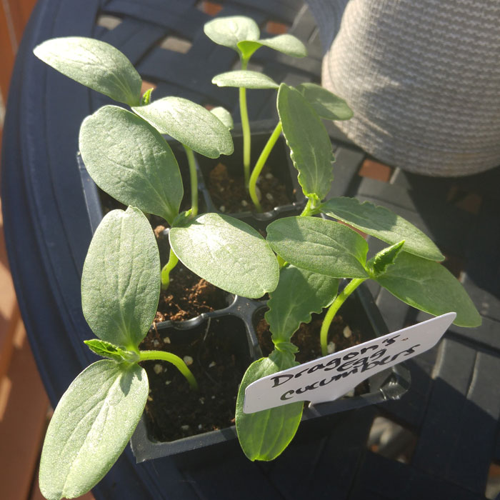 Why You Should Grow From Seed (And Why You Shouldn't