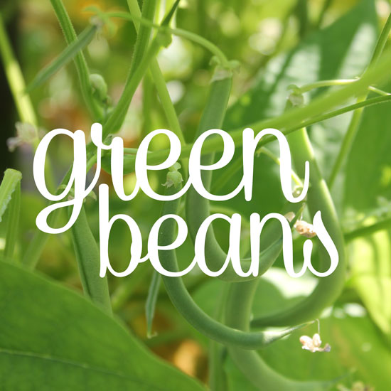 How to Grow Green Bush Beans Vertically