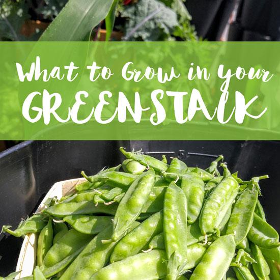 What to Plant in Your GreenStalk Garden