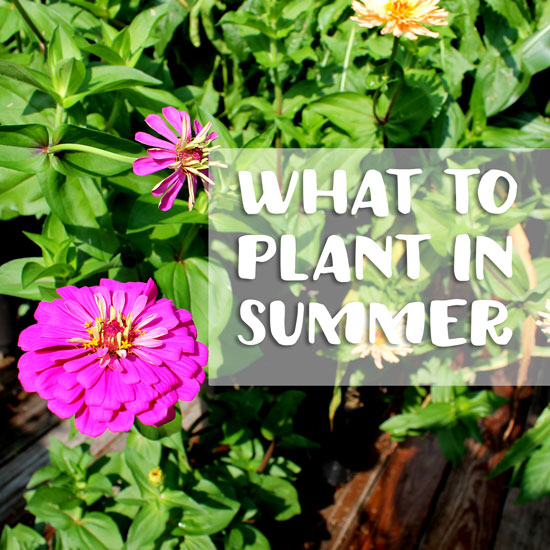 Late Summer Planting Ideas