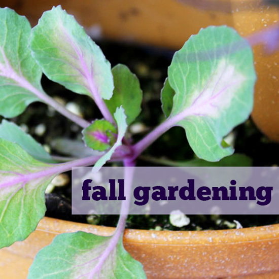 All About Fall Gardening