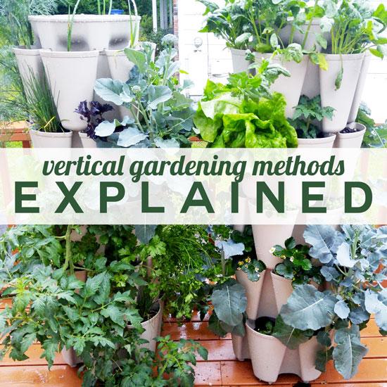 Vertical Gardening Options – Explained