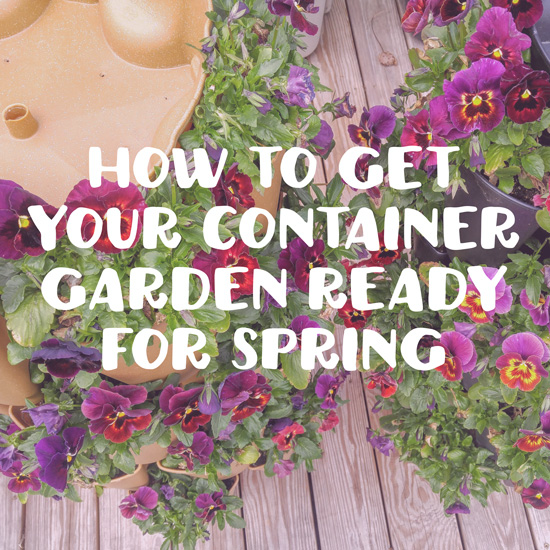 How To Get Your Container Garden Ready For Spring