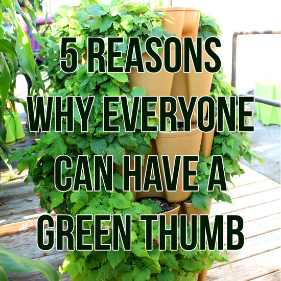 5 Reasons Why Everyone Can Have A Green Thumb