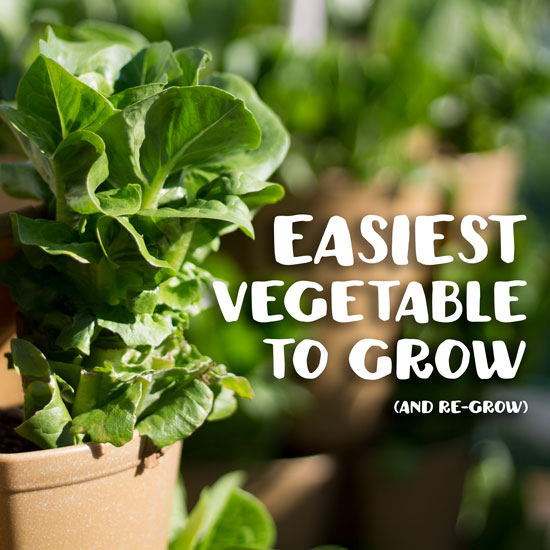 The Easiest Vegetable to Grow | Anyone Can Grow This!