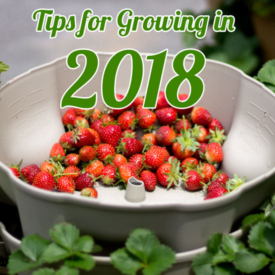 5 Tips for Gardening in 2018