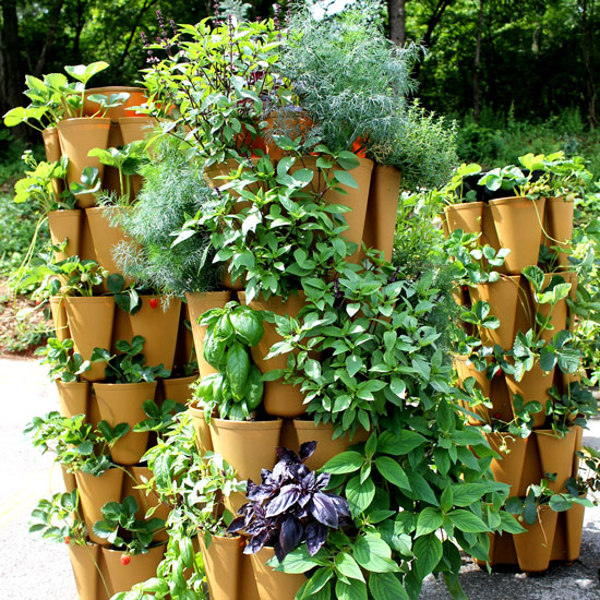 Herbs We LOVE to Grow Vertically