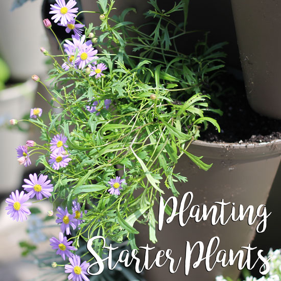 How to Plant Starter Plants in a Vertical Garden