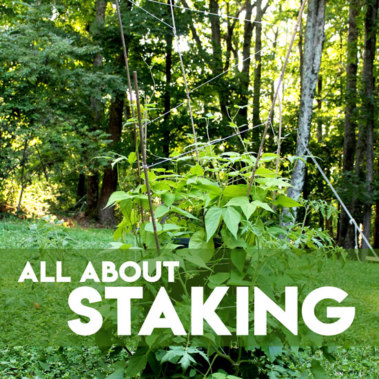 How to Easily Stake and Trellis Plants Growing Vertically