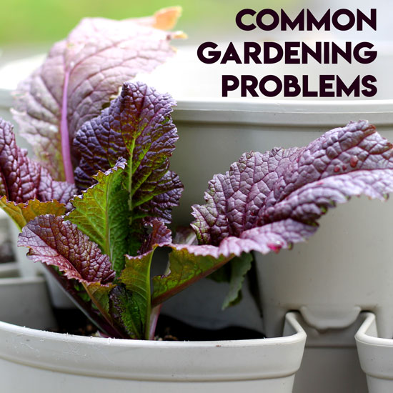 Why Aren't My Plants Growing? Common Gardening Problems Explained