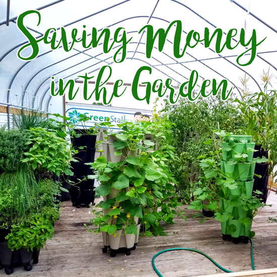 5 Ways to Save Money in Your Garden