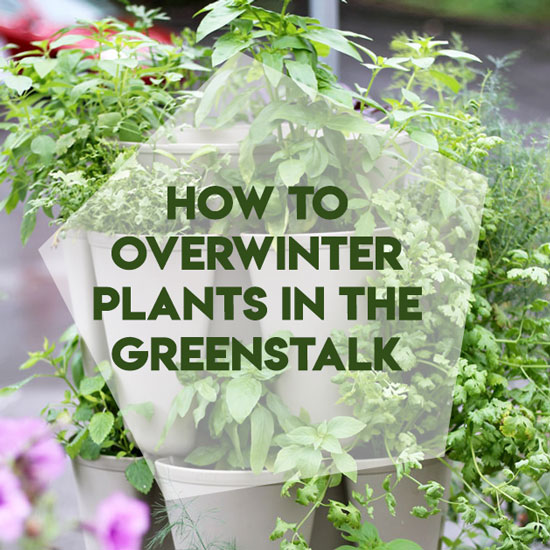 5 Tips to Make Sure Your Plants Survive the Winter