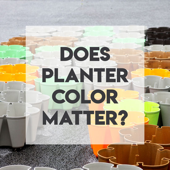 Does the Color of the Planter Make a Difference?