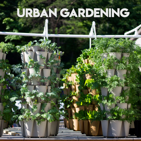 How to Create a Simple Urban Vegetable Garden