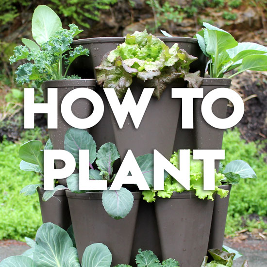 Video: How to Plant Up a GreenStalk Vertical Planter Step by Step