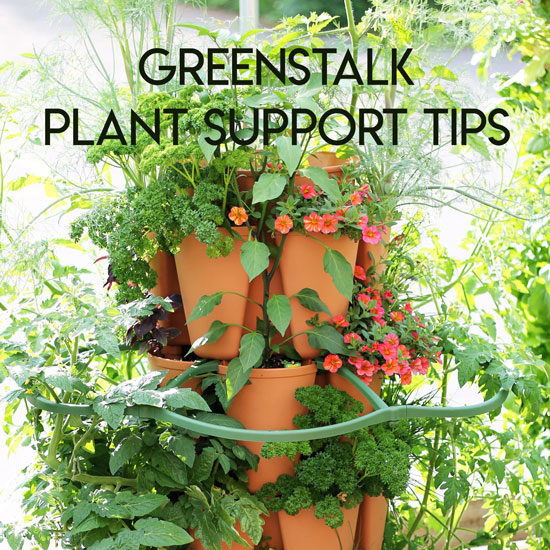 Tips for Using the New GreenStalk Plant Support
