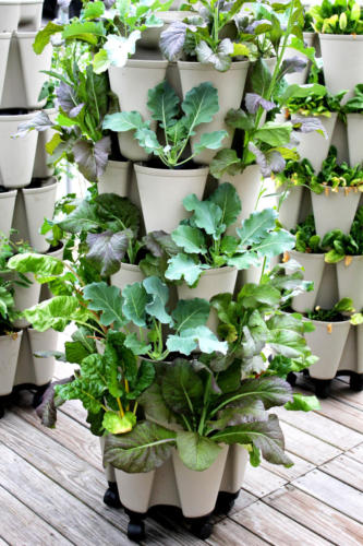 5 Tier GreenStalk Vertical Garden