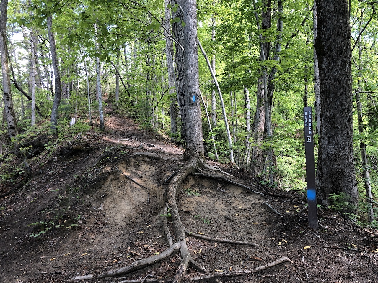 Pulliam Creek Trail and Bear Branch Trail Junction