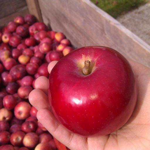 belle pomme rouge