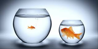 Are you a BIG Fish in a SMALL pond?