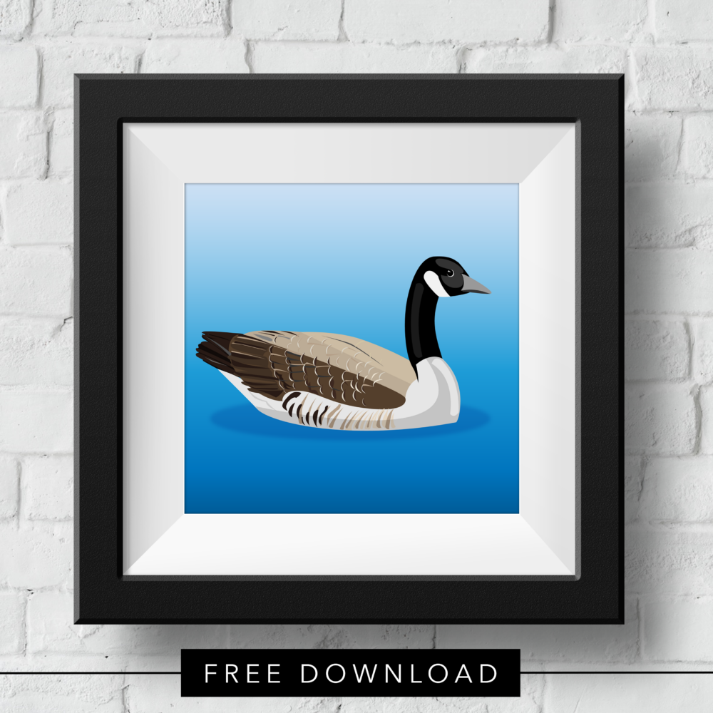 canadian-goose-free-download