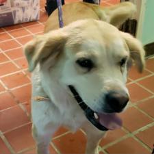 Animal Shelter dog Dixie