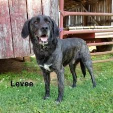 Animal Shelter dog Levee