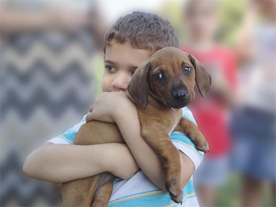 Monroe County Animal Shelter's adoption event