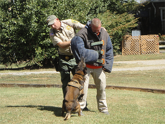 "Sheriff Tommy Jones in the ""bite suit"" for a K9 demo"